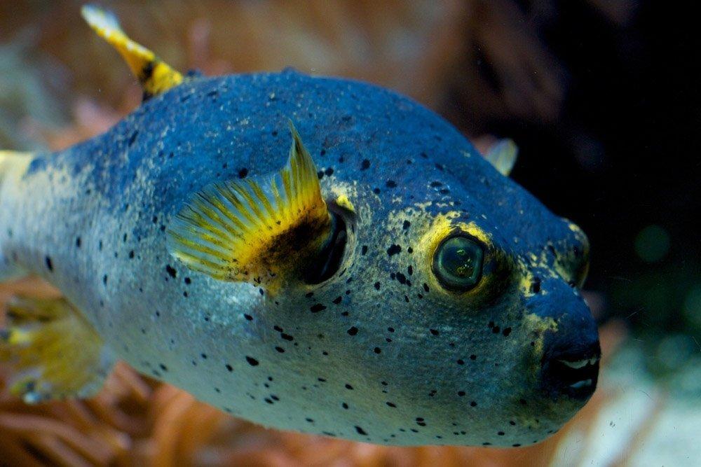 animais mais estranhos mar