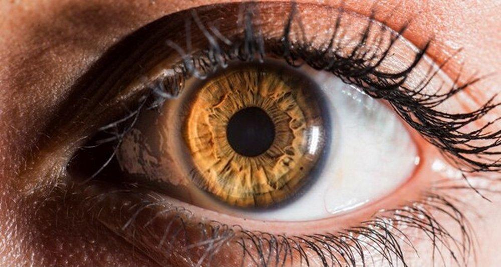 Olhos Cor Avelã