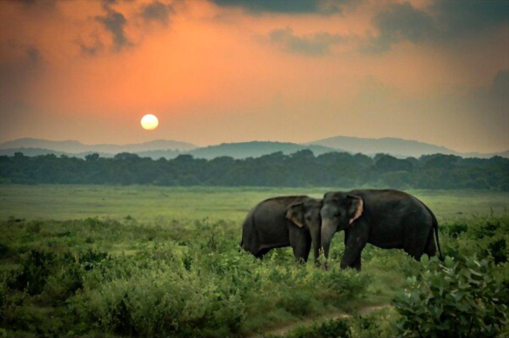 Fatos sobre Elefantes