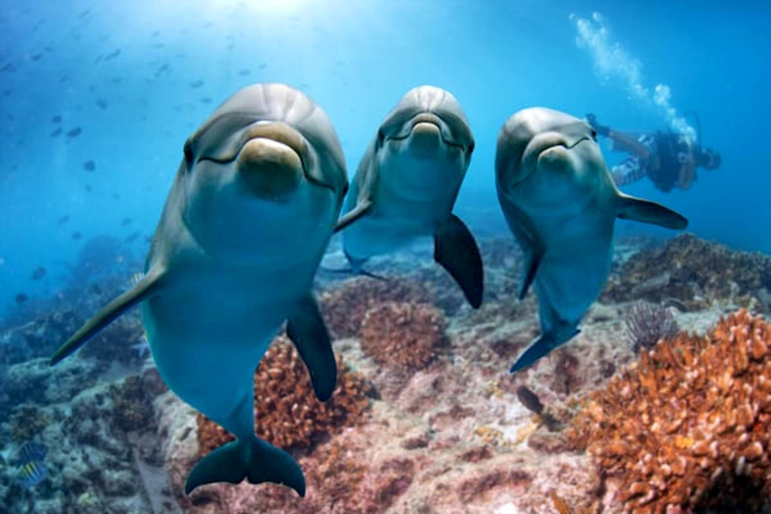 Fatos sobre Golfinhos