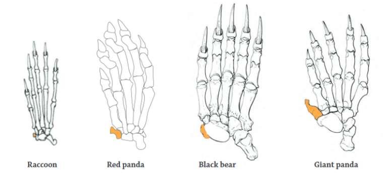 10 Fatos Interessantes sobre o Panda 1
