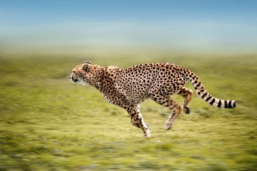 20 Fotografias Incríveis de Animais em Acção 1