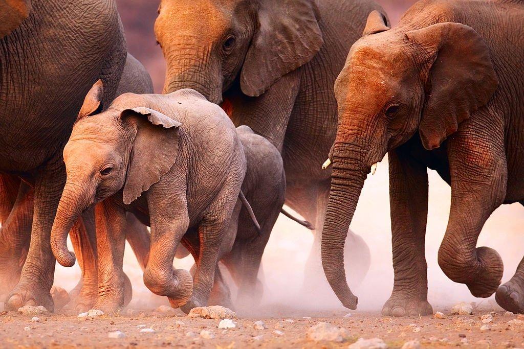 Fotografias Incríveis de Animais em Acção